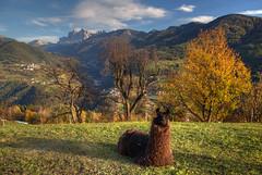 Sitting Pretty (hapulcu) Tags: altoadige chiusa herbst italia italie italien italy klausen südtirol automne autumn autunno toamna