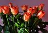 DSC_8974 (PeaTJay) Tags: nikond750 reading lowerearley berkshire macro micro closeups gardens indoors nature flora fauna plants flowers bouquet rose roses rosebuds