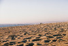 #505 (Tiago (Alves) Miranda) Tags: 35mm fotografiaanalógica canoneos300 arquitectura arquitecturareligiosa capela senhordapedra praia miramar vilanovadegaia portugal tiagoalvesmiranda