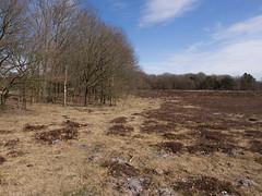 Schipborger Strubben (Jeroen Hillenga) Tags: drenthe landscape landschap netherlands nederland natuur nature natuurgebied natur heide heather drentscheaa