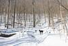 Hadley/Pinnacle/Spruce - March 25,2017 (rickcalzi) Tags: hiking camping forest firetower 46er adk adirondacks adirondack dogs dog snow trail mountains mountain range