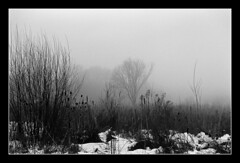 FILM - Winter marsh (fishyfish_arcade) Tags: analogphotography bw blackwhite blackandwhite filmphotography filmisnotdead istillshootfilm ilfordhp5plus monochrome nikkor2880f3556afd nikonf70 analogcamera film mono mist fog snow winter