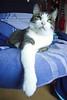 Laurin genießt den ruhigen Tag (Hipij) Tags: cat chat kater