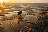 The dogs on the beach (-clicking-) Tags: sunrise sunlight sunshine dog animals pet sand beach onthebeach cầngiờ vietnam