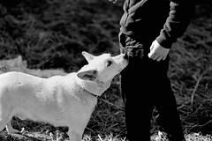 meeting again (Bookriver.) Tags: meeting again dog japan takahiro fujita