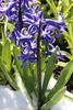 IMG_7054 (Usagi93190) Tags: macro flower biltmore estates greenhouse gardens ashville north carolina