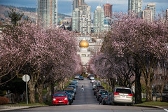 Seeking Sakura 🌸🌸🌸🌸 Vancouver, BC (Michael Thornquist) Tags: cherryblossoms prunusaccolade sakura pink blossoms blooming spring spring2018 akalisinghsikhsociety sikh gurdwara sikhgurdwara sikhtemple temple eastvancouver eastvan vancouverphotos vancouver britishcolumbia dailyhivevan vancitybuzz vancouverisawesome veryvancouver 604now photos604 explorecanada ilovebc vancouverbc vancouvercanada vancity pacificnorthwest pnw metrovancouver gvrd canada 500px
