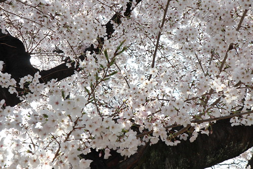 春を求めて