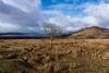 The West Highland Way: Day 2 (aussietramper) Tags: west highland way scotland hiking thru hike drymen rowardennan loch lomond highlands