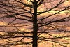 Outreach.... (Joe Hengel) Tags: outreach tree treebranch treebranches silhouette silhouettes ephrata ephratapa pennsylvania clouds sky evening eveninglight eveningskies watchingthesunset sunset