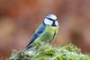 IMG_2496 (Dougie Edmond) Tags: ringford scotland unitedkingdom gb wildlife nature spring sunshine hide photorgrphy canon