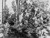 IMG_1368.jpg (xposed59405) Tags: palms blackandwhite flowers f40 brightsky 180sec iso80 10236mm palmtree trees treetrunk