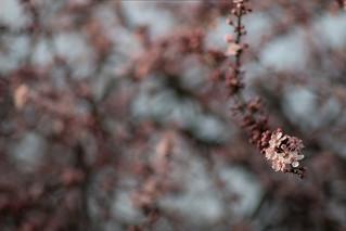 Vintage Lens Blossom