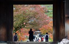 Nanzen-ji 3 (Aerisabel) Tags: nature autumn landscape mountain japan japon paisaje bosque árbol hierba ladera kioto kyoto carretera madera montaña animal parque puente tsugaosan kosan temple kozanji nanzenji 禅林寺 zenrinji zen buddhist beautiful forest tree