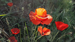 Poppies from my town (cirooduber) Tags: visualart awardtree deepdream digitalarttaiwan trollieexcellence poppies flowers amapolas