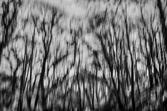 fall and fall again (Dr Kippy) Tags: icm intentionalcameramovement canon100d bw blackwhite blackandwhite mono monochrome canonefs24mmf28
