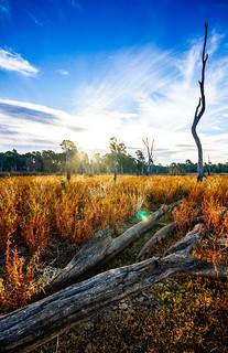 Reedy swamp, Shepparton