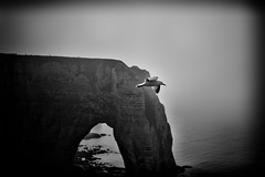 Free bird (rvjak) Tags: sky bird oiseau mouette seagull black white noir blanc bw d750 nikon etretat normandie normandy mer océan ocean sea falaise cliff