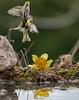 Narciso ed altro (Danilo Agnaioli) Tags: canon7dmarkii sigma300 umbria italia collinedelperugino bird perugia
