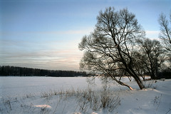 03 - [Precisa100] (stepanov9) Tags: minoltadimagescanelite540 nikonf80 solnechnogorskdistrictnearmoscow tree water lake landscape