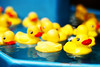 (Casey Lombardo) Tags: minoltasrt101 rubberducky rubberduckies duck ducks toys plastic color colorful film filmphotography filmgrain grainy kodak kodakfilm kodakgold kodakgold200 gold200