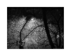 Snow (Alexandr Voievodin) Tags: snow lamp trees branches blackandwhite monochrome nikon1v1