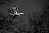 Landing (owdtwobad) Tags: nature life animal bird seagull wings fly light shadow sky greyscale monochrome blackandwhite