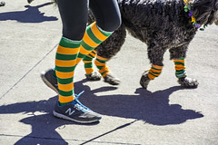 keeping step in the parade (TAC.Photography) Tags: socks stripes coloredsocks stepping walkingthedog tomclarknet tacphotography yip2018