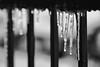 Thaw (NVenot) Tags: tokina 100mm macro f28 fotodiox ice cold frozen winter icicle drop drip monochrome black white contrast skylum macphum luminar 2018 water