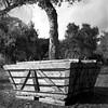 Crated tree (Tpstearns) Tags: minoltaautocord tlr mediumformat 120 6x6 bw blackandwhite monochrome film acros