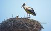 Die Störche sind wieder da ;-) (baerchen57) Tags: storch störche athensleben nest