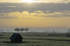 morning calmness (Wöwwesch) Tags: sheep pastures mist sunrise country rural gras hut fence tree she