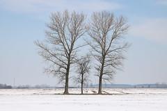Bobrowa Trees pic [4] IMG_0307 b (david.neville2776) Tags: podkarpackie bobrowa trees snow drzewa śnieg