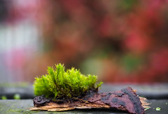 Piece of Bark & Moss (Orbmiser) Tags: mzuikoed1240mmf28pro 43rds em1 mirrorless olympus ore portland m43rds bark moss