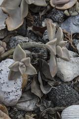 The Natural Abstract (Thomas Vasas Photography) Tags: nature abstract rocks leaves plants columbus georgia