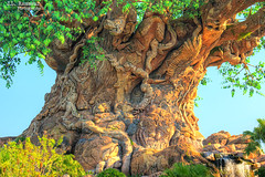 Tree of Life (details) - Disney's Animal Kingdom (J.L. Ramsaur Photography) Tags: jlrphotography nikond7200 nikon d7200 photography photo lakebuenavistafl centralflorida orangecounty florida 2016 engineerswithcameras animalkingdom disney'sanimalkingdom photographyforgod thesouth southernphotography screamofthephotographer ibeauty jlramsaurphotography photograph pic waltdisneyworld disney disneyworld treeoflife waltdisney happiestplaceonearth wheredreamscometrue magical tennesseephotographer imagineering treeoflifeanimals waltdisneyworldresort disneyimagineering blueskydisney hdr worldhdr hdraddicted bracketed photomatix hdrphotomatix hdrvillage hdrworlds hdrimaging hdrrighthererightnow tree animals leaves lookclose disneyisinthedetails inthedetails