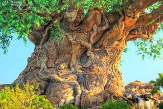 Tree of Life (details) - Disney's Animal Kingdom