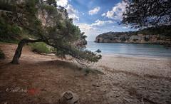 (157/18) Soledad (Pablo Arias) Tags: pabloarias photoshop photomatix capturenxd españa cielo nubes playa arena árbol pino mar agua mediterráneo roca bahía cala macarella menorca