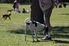 Compañeros de aventuras (Letua) Tags: amigos amistad amo amor animal dog friendship love mascota park parque perro pet playingtime portrait retrato robado ternura juego