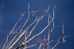 _DSC8343 (andrewlorenzlong) Tags: joshua tree national park joshuatree joshuatreepark joshuatreenationalpark california desert cottonwood spring cottonwoodspring mastodon loop mastodonloop