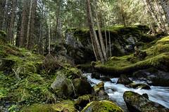 détail forestier (christophebiget) Tags: nantbenin eaux ponturin
