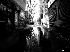 Back Alley Reflections 1 (MassiveKontent) Tags: alley puddle reflection noiretblanc blackwhite montreal bw contrast city monochrome urban blackandwhite streetphoto montréal quebec streetphotography bwphotography streetshot gopro fisheye tree urbandecay shadows