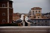 Love (marcoragusa1) Tags: bird birds nature love roma rome italia italy portrait animals animali uccelli photo photography nikon nikond3300 reflex flickr travel urban city città europe amateur spring like landscape moment picture pic foto capture gallery today world beauty beautiful magic