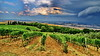 Southern Tuscany, Val d'Orcia (gerard eder) Tags: world travel reise viajes europa europe italy italia italien tuscany toscana toskana valdorcia wineyards landscape landschaft paisajes panorama outdoor clouds wolken nubes natur nature naturaleza rural rurallife agricultura agriculture landwirtschaft