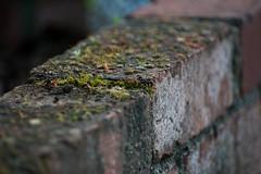 Bricko (Brannan!) Tags: brick moss plant home outside backyard fungus fungi macro dirt dirty rock