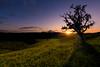 Sunset over the Algarve Serra (www.craigrogers.photography) Tags: pôrdosol algarve portugal serra hills sãomarcosdaserra silhouette grass tree field mountain countryside orange oak dusk