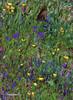 DSC_8845b-EditFAA (john.cote58) Tags: butterfly flowers wild field spring seasons color colorful art creativeedit grass theme artistic professional photography josephyvoncote interiordesignart nature outdoors outside oilpaint