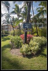 IMG_1486 (LifeThrough_TheLense) Tags: cataloniaroyalbavaro adultsonly puntacana beach pool