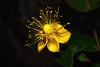 DSC_6525lk Millepertuis Magical Beauty (laurentbourg07) Tags: millepertuis low key nikon d5300