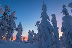 Lapland sunset (Mathieu Pierre) Tags: lights lapland canon 7dmark2 7dmarkii sigma14mmf18 sunset trees winter nature frost arctic hill finland nuit night sky